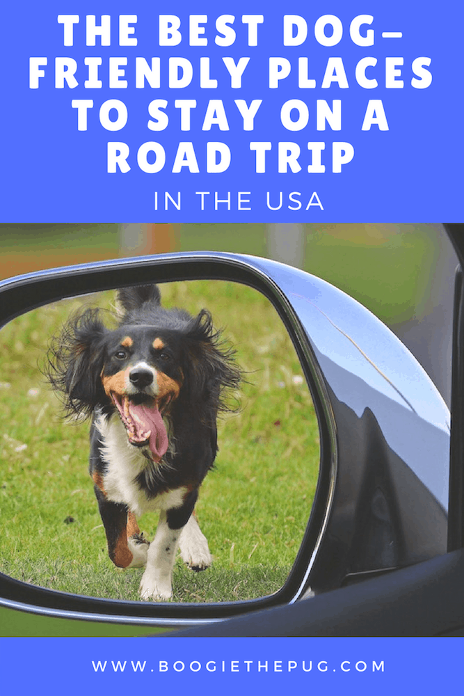 USA road trips are the best, but they're even better when your dog is along for the ride. Here are six dog-friendly places to stay when on the road.