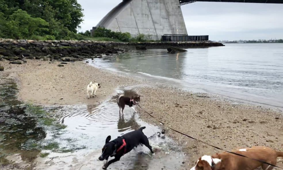 Top 4 Spots Where Your Dog Can Swim in NYC