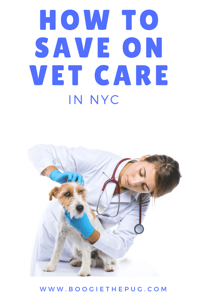 NYC is expensive! But you can still get quality healthcare for your pup without breaking the bank. Here are the best ways to save on vet care in NYC.
