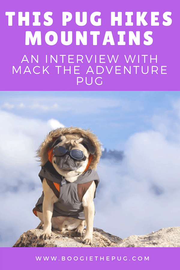 Mack the adventure pug and his human Nate love to go on adventures together, camping and hiking all across the United States.