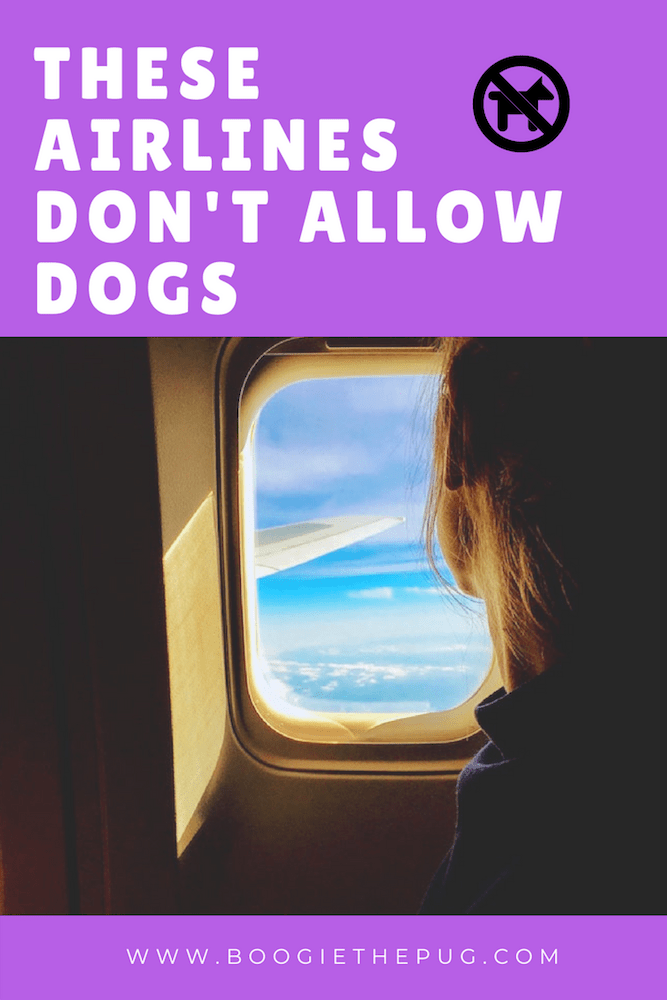 These Airlines Don't Allow Dogs