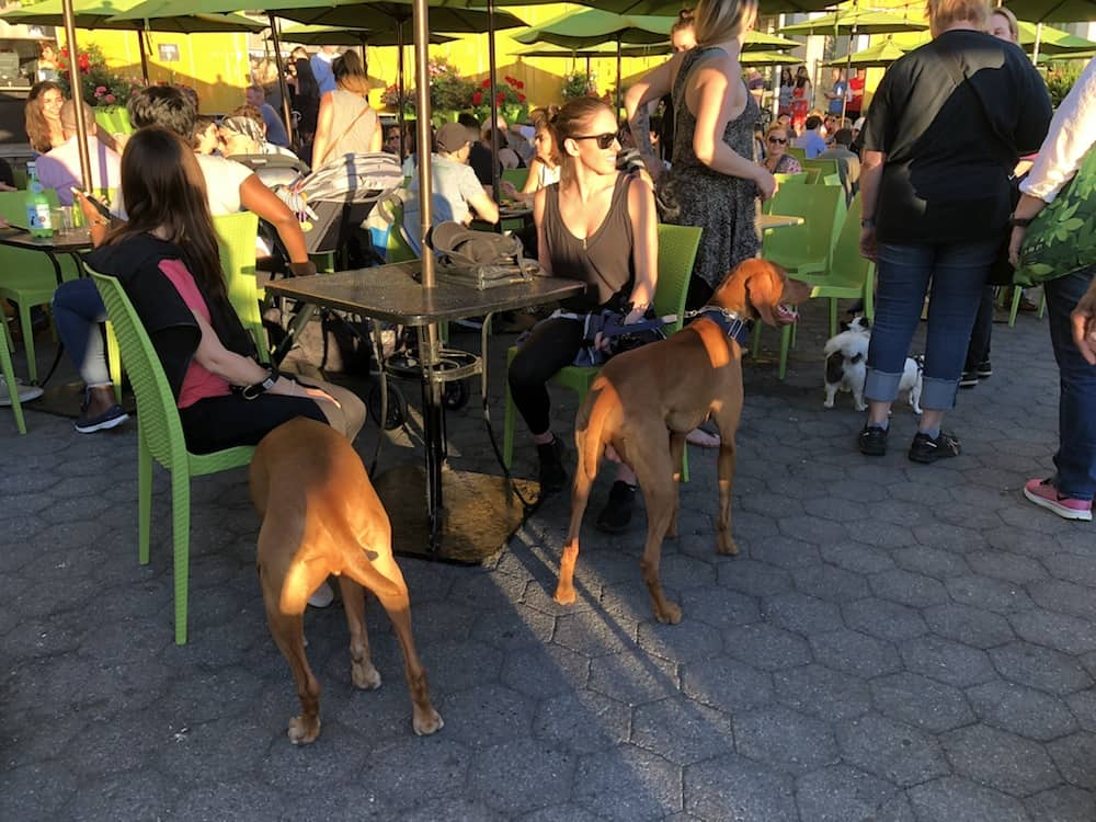10 Dog-Friendly Places to Eat in NYC