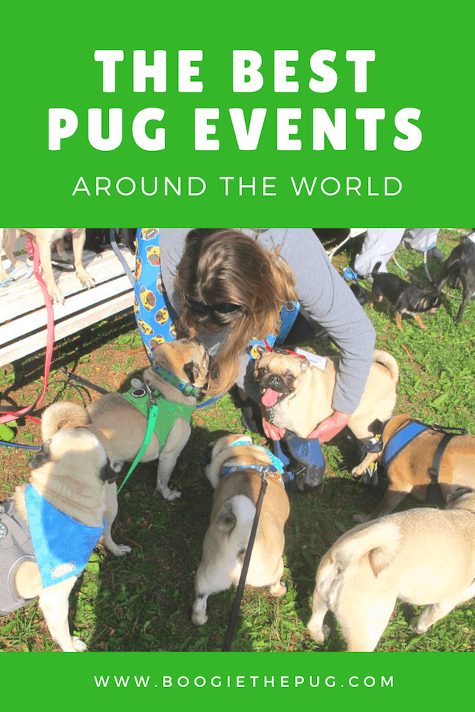 The Best Pug Events Around the World