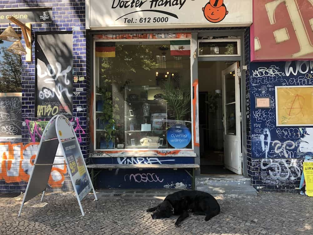 Dogs in Berlin