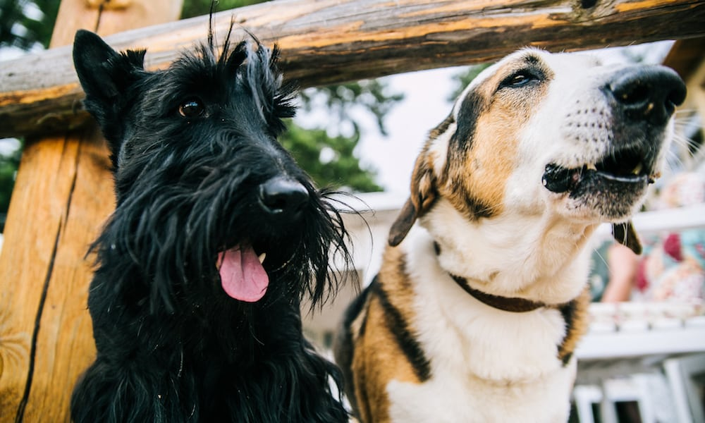 How to meet dogs while traveling