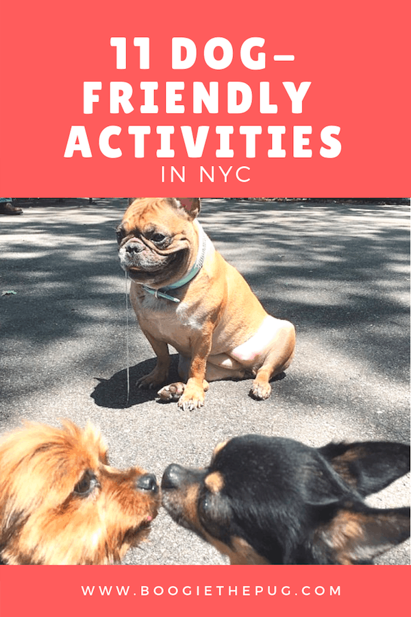 11 Dog-Friendly Activities in NYC