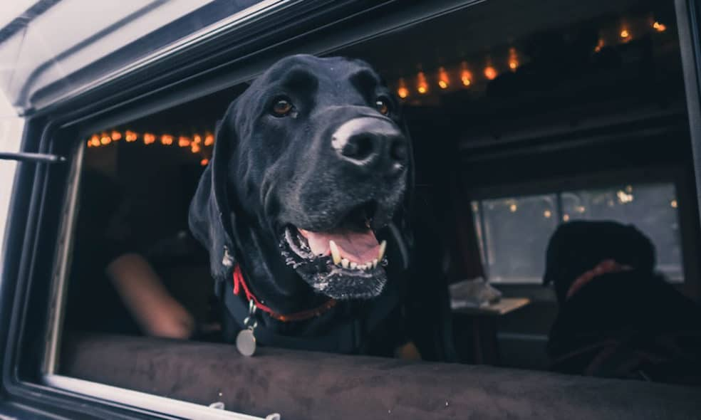 Traveling in a Van with Dogs