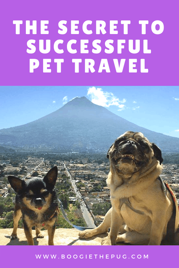 This is the #1 thing that has helped us when traveling with our two dogs, near or far, locally or internationally, big city or country.