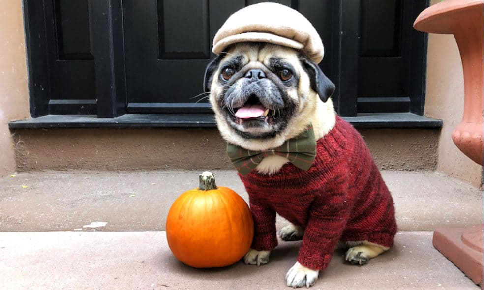 8 ways to celebrate fall with your dog