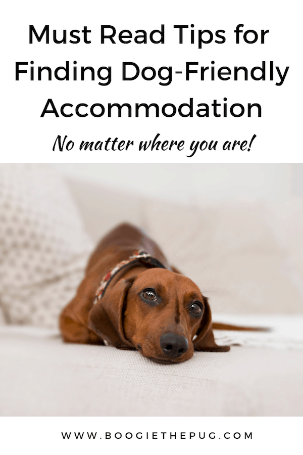 If you're planning a trip with your dog, finding dog-friendly accommodation is probably at the top of your list. Here are tips for finding a place to stay.
