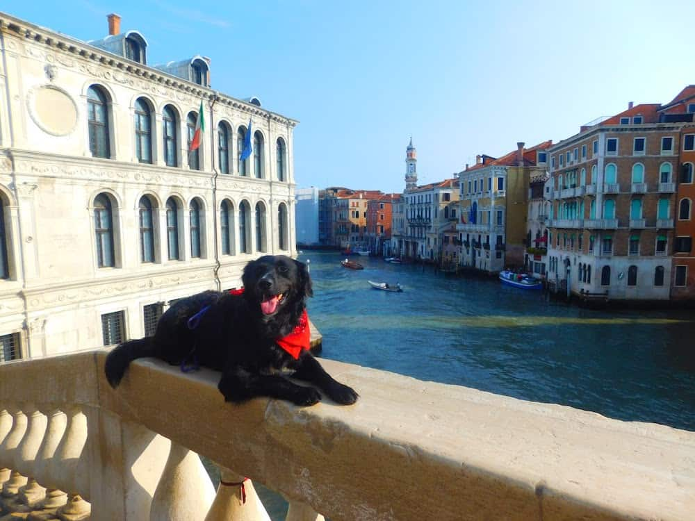 Backpacking Through Europe with Large Dogs