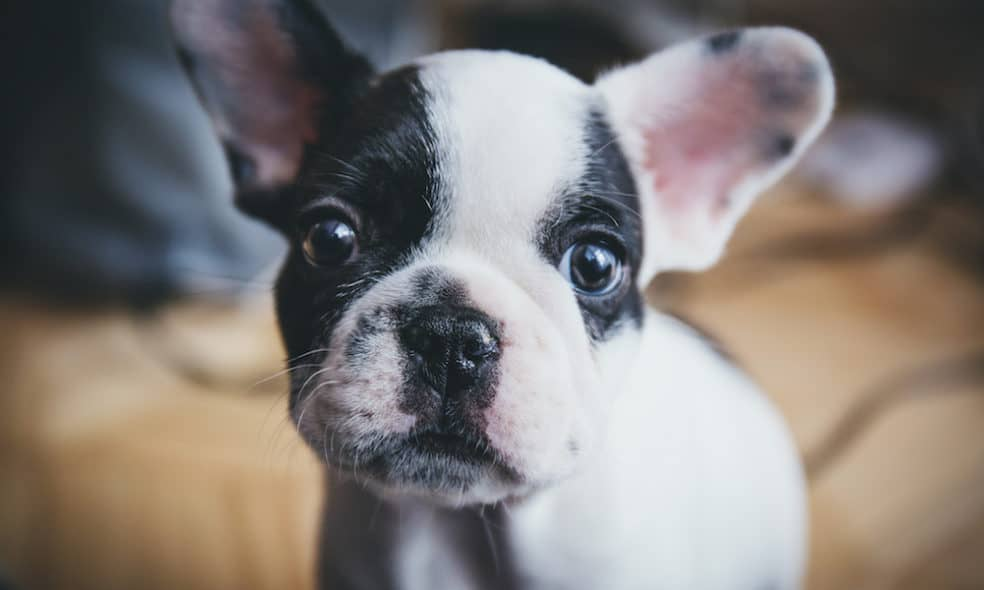 Tips for Finding Dog-Friendly Accommodation