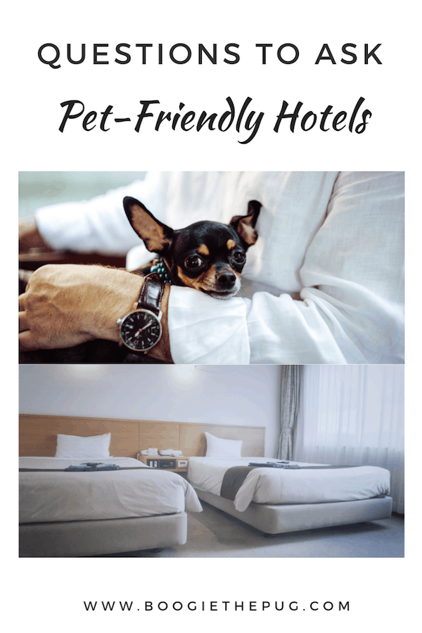 Questions To Ask Pet-Friendly Hotels