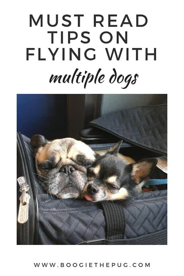 Flying with multiple dogs can be a challenge. A few easy moves can make your trip a whole lot smoother. Check out these must read tips to learn how!