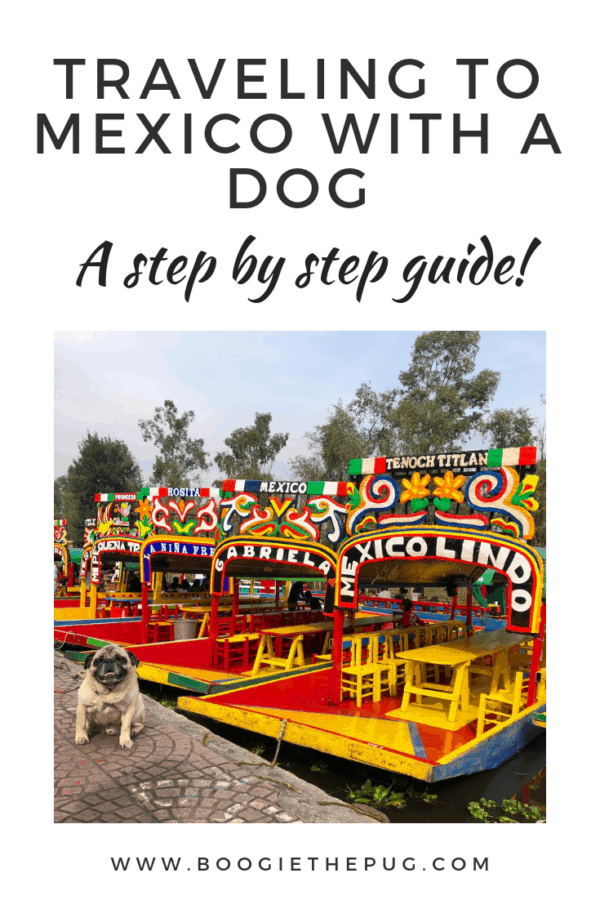 If you're traveling to Mexico with a dog, here's a step by step guide of what you'll need to enter the country. Viva Mexico!