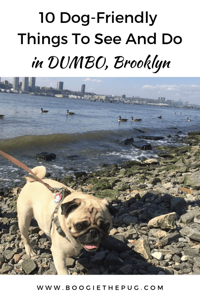 DUMBO, Brooklyn is a great place to spend time with your furry friend. Located just across the river from Lower Manhattan, you'll find tons to do and see.