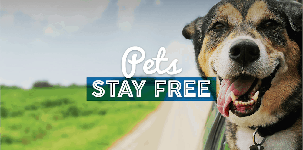 Pet-Friendly Hotels with No Fees