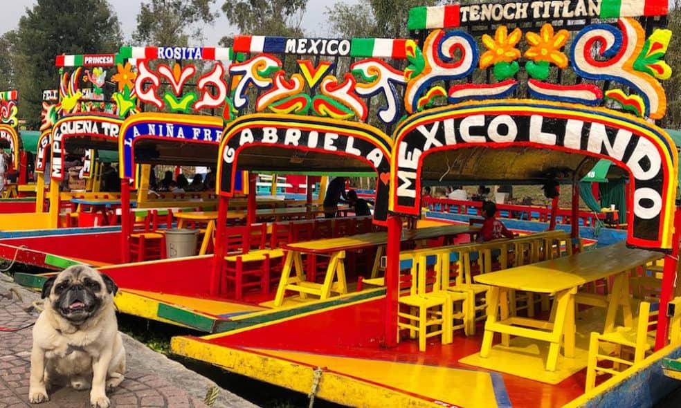 Dog Friendly Mexico