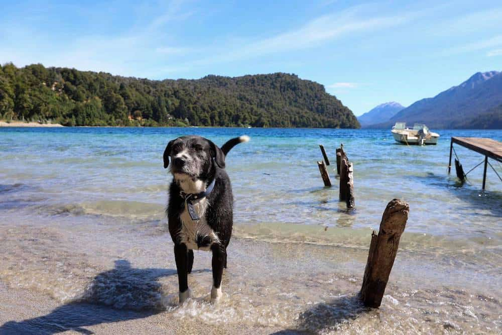 Petting Dogs Around the World: An Interview With a Pet Sitter