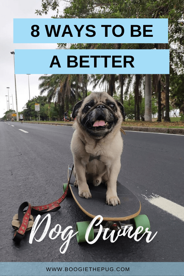 It's the New Year! Time to reflect on what worked and what didn't when it comes to life with dogs. Here are 8 ways to be a better dog owner.