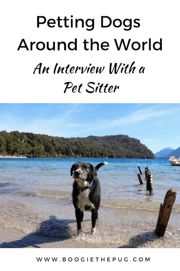 Petsitting is the ultimate way to travel, spend time with animals, and save money. We reached out to a veteran petsitter to get the scoop.