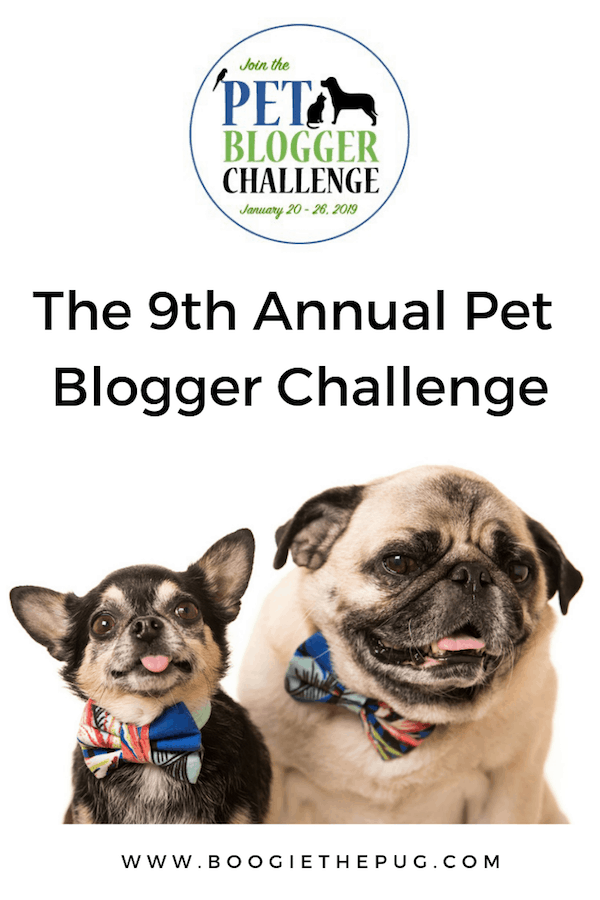 2018 was my first full year of blogging! To celebrate, I'm taking a look back at this inaugural year and joining Gopetfriendly.com's Pet Blogger Challenge.