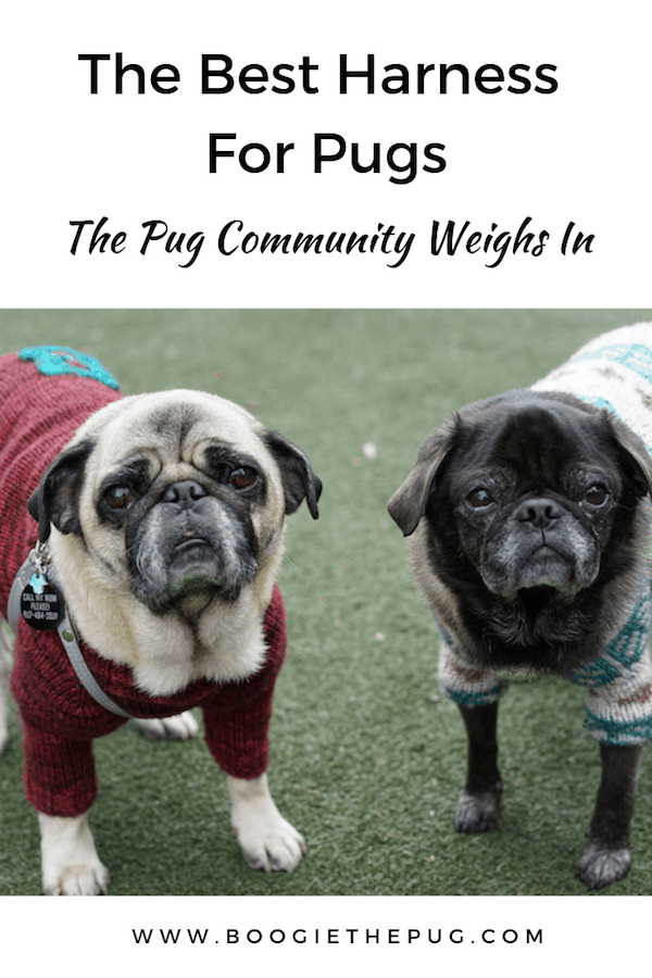 We asked the pug community: what's the best harness you've used for your pug? Here are the harnesses most pug parents swore by.