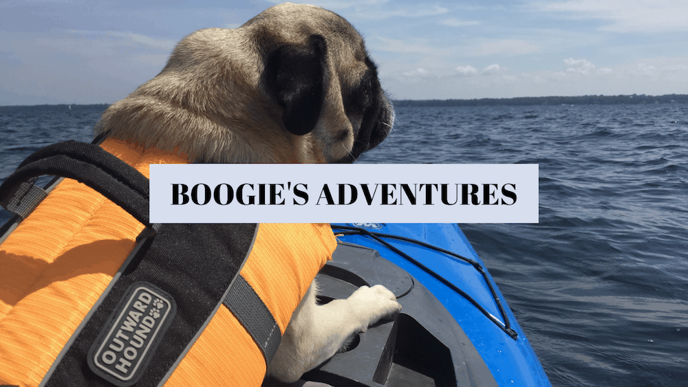 Boogie's Adventures
