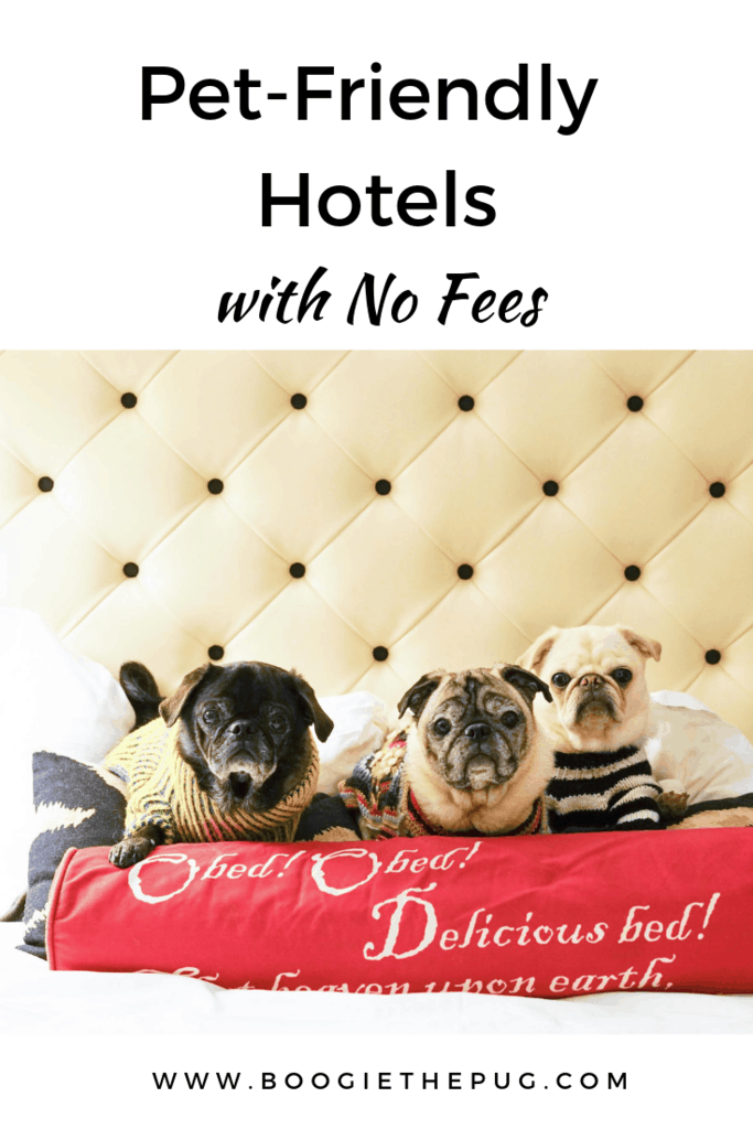 Check out these hotel chains that welcome your furry friends without any extra costs - that's right, no extra fees, no deposits, and no one time payments.