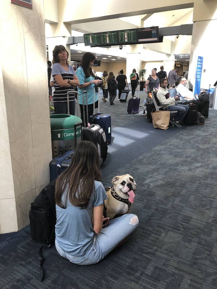 It's the law that airports servicing more than 10,000 passengers per year must provide a pet relief area. Here are the airport pet service areas we've encountered so you'll know what to expect when flying.