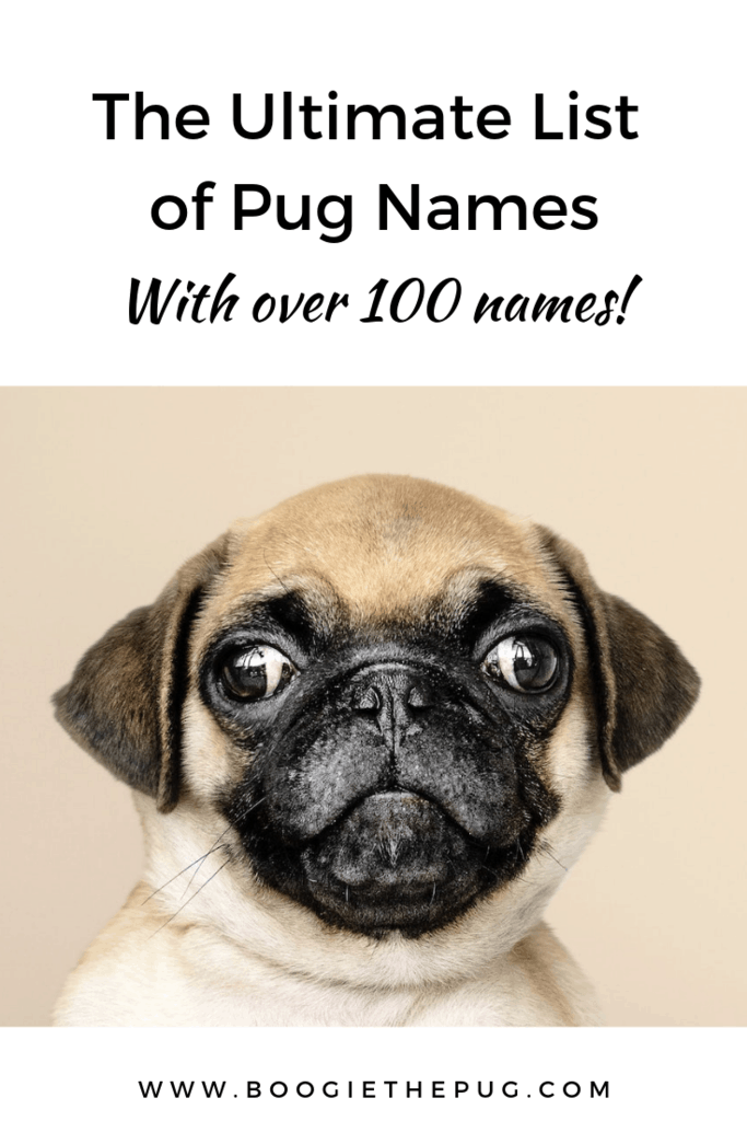 Naming a pug is a big responsibility. It will be a word that you'll use for years to come. Here are a few tips on picking the best name for your pug.