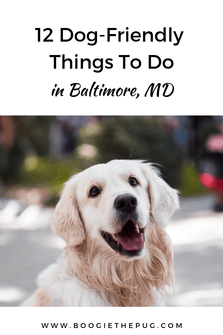 Baltimore has plenty to do and explore for both two- and four-legged friends alike. Here are 12 dog-friendly things in Baltimore you won't want to miss.
