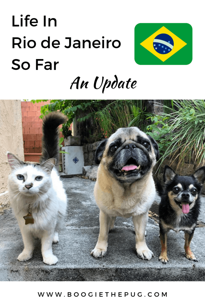 We touched down in Rio just over two months ago! Here's an update, including how we found housing, and what the pups have been up to!