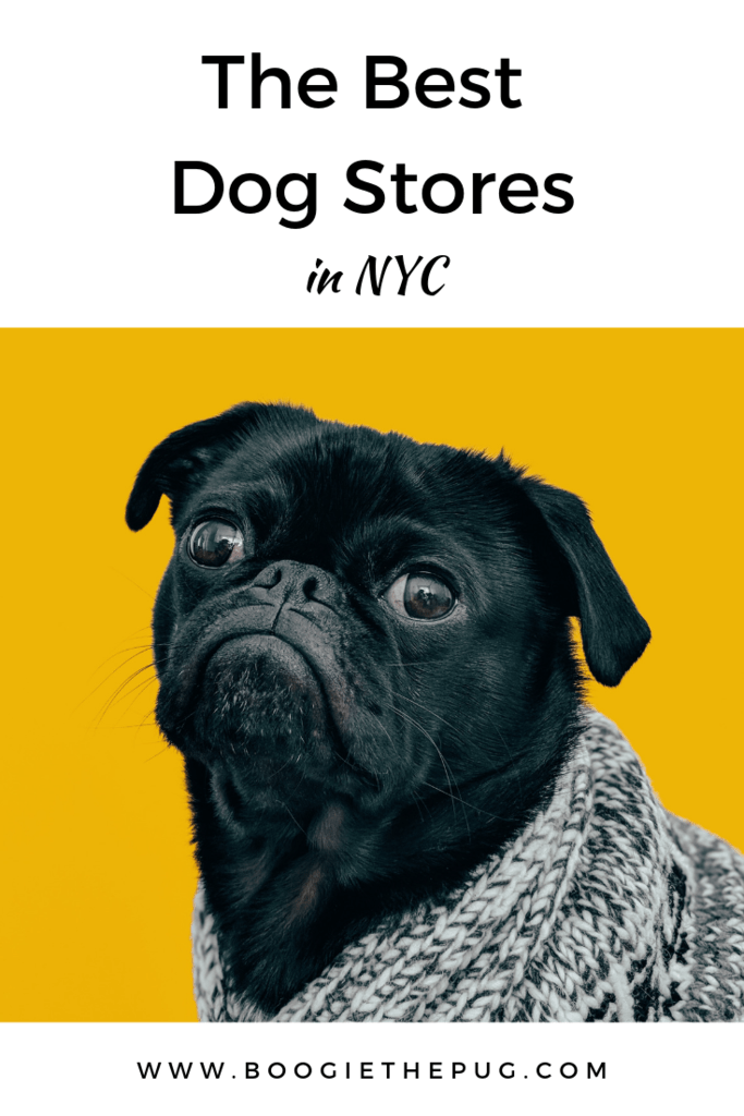 The Best Dog Stores In NYC - Boogie the Pug