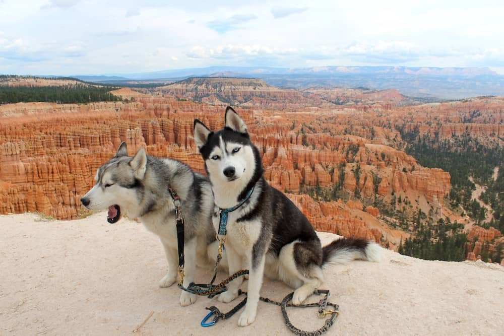 When dog mom Laura searched for a group to socialize with her and her Siberian Husky Loukia, she never realized that her life was about to change.