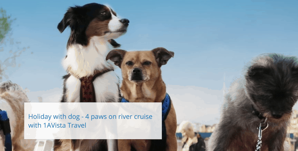 Times are changing, and your furry friend can now join you out on the water. Help your pup grow sea legs on one of these pet-friendly cruises.