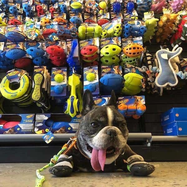 New York City has many options when it comes to shopping for your dog. Here is a list of our favorite, must-visit dog shops for one-of-a-kind pet products.