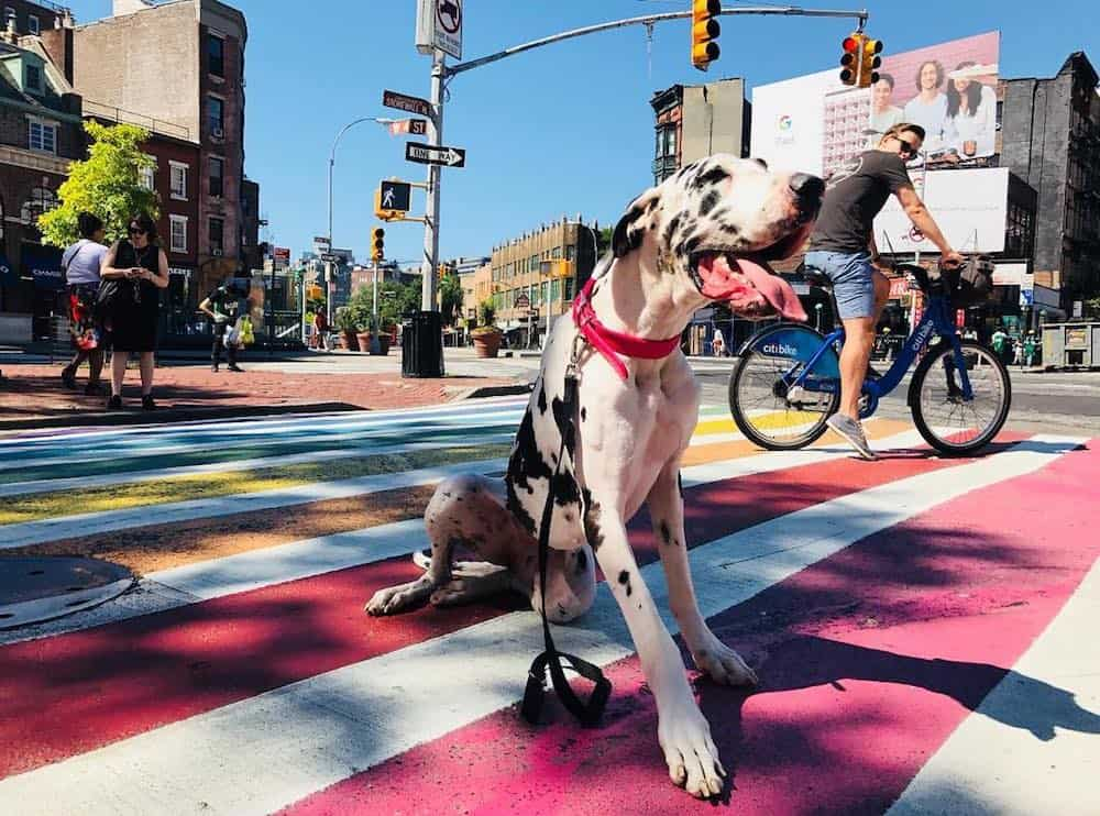 Greenwich Village is one of NYC's most vibrant and dog-friendly neighborhoods. Grab your four-legged bff and hit up these dog-friendly locations.