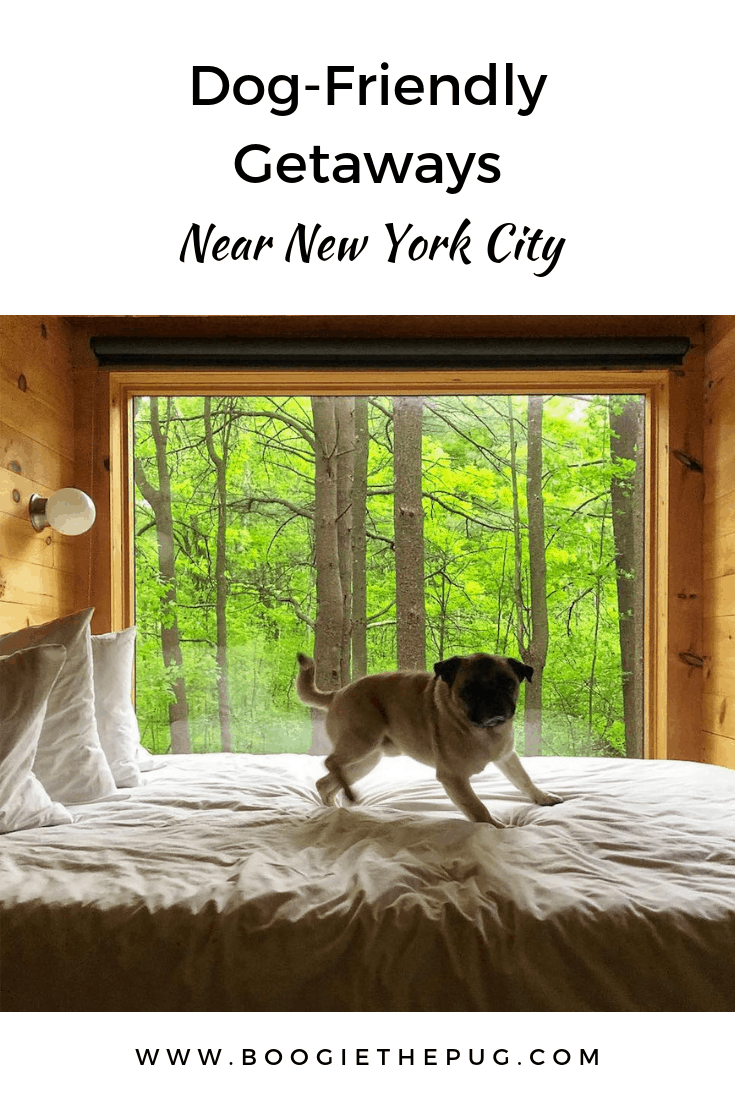 Sometimes it's time to hit the reset button and head out of the city. Go to one of these dog-friendly locations where you and your pup are welcome.