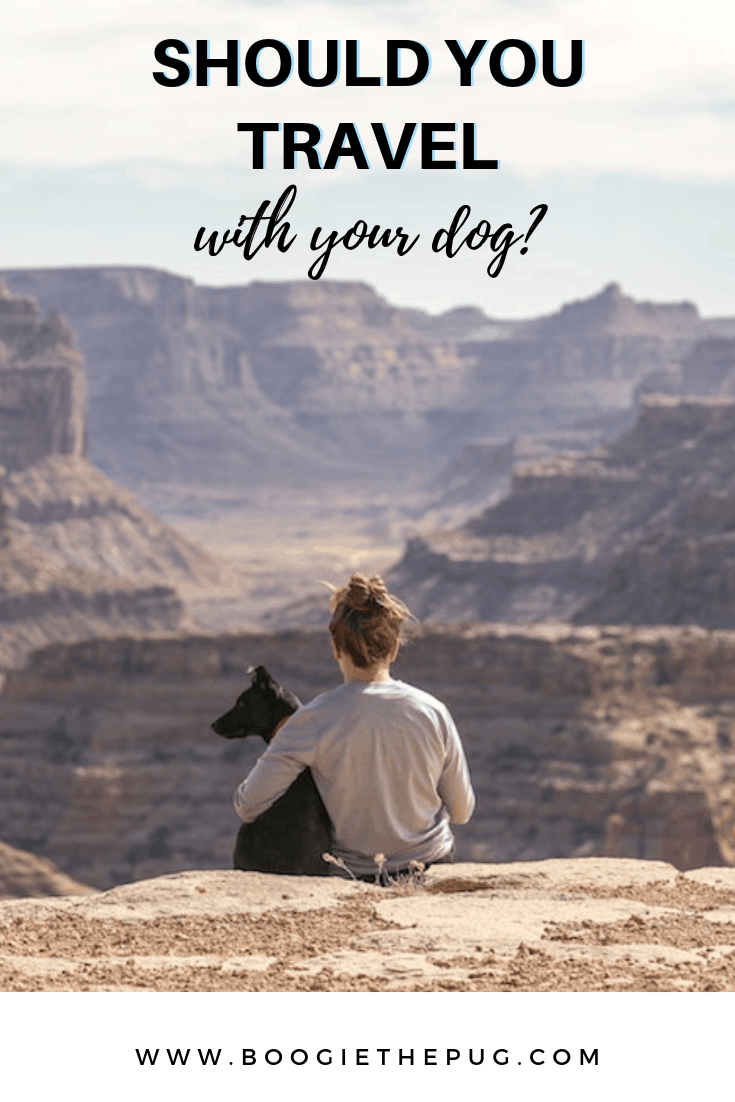 Before you book that dream trip to Paris with your pup, ask yourself a few questions to see if your dog is fit for travel.