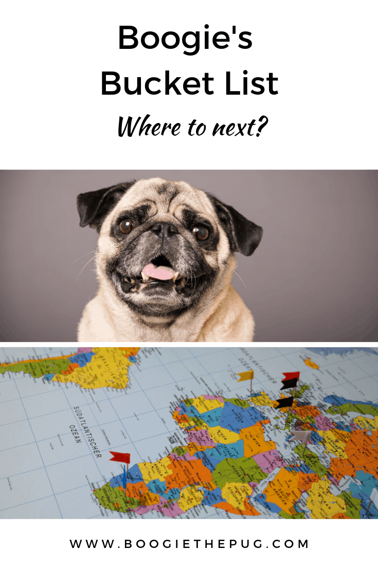 Do dogs suffer from wanderlust? Are they bit by fleas, ticks, and the travel bug? Boogie seems to think so! Check out his bucket list.