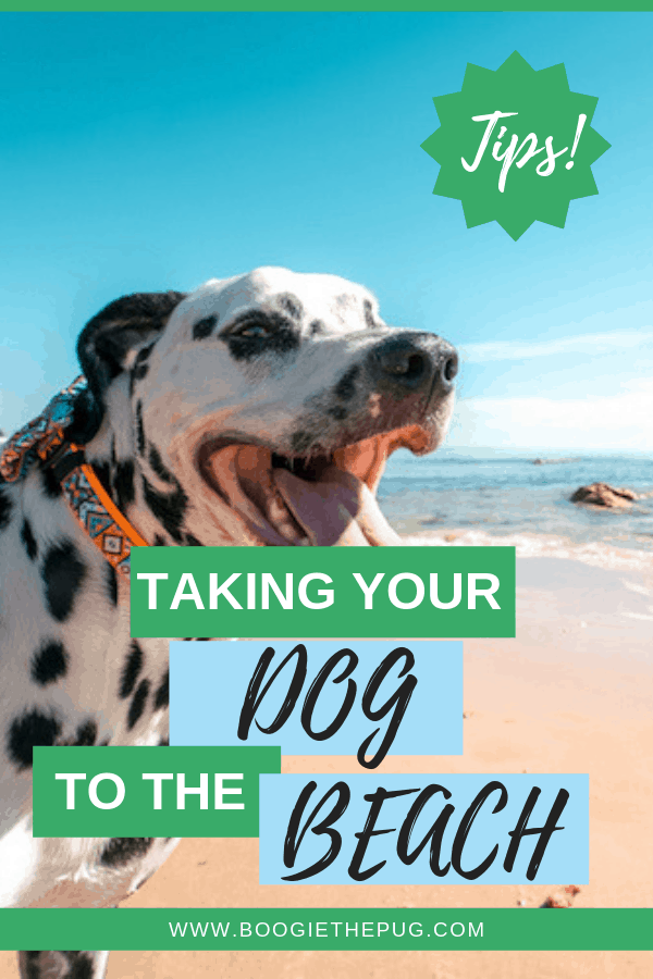 No summer is complete without a trip to the beach. Bring your dog along and keep the following in mind before you hit the shore.