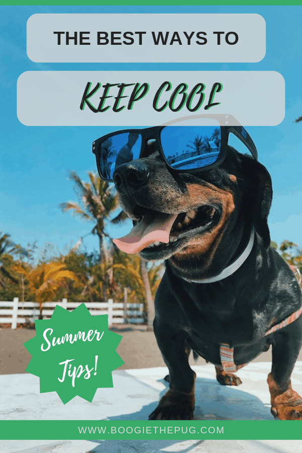 When summer rolls around and temps rise, your pup will look to you to keep them comfortable. Here are the best ways to beat the heat and keep your dog cool.