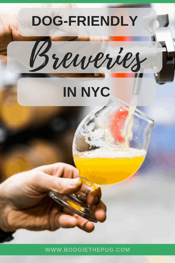 Many NYC breweries are welcoming to booze-guzzling dog lovers. Here's a list of dog-friendly breweries in NYC. Grab your pup, and a pint!