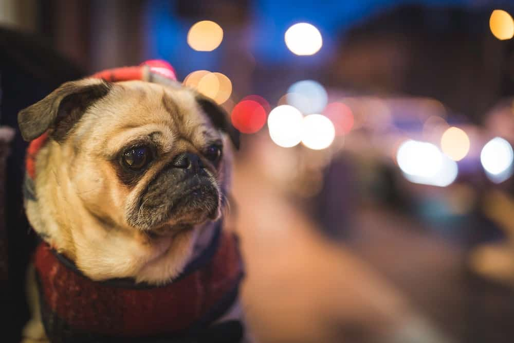 If you're planning an internationl trip with your dog then you'll want to read this. Here's the most annoying thing about international pet travel.