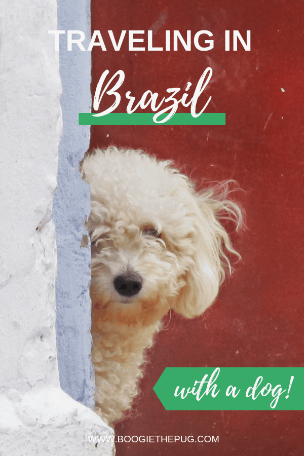 Whether you're road tripping throughout the country, city hopping or staying in one place, these tips will come in handy if you're traveling in Brazil with a dog.