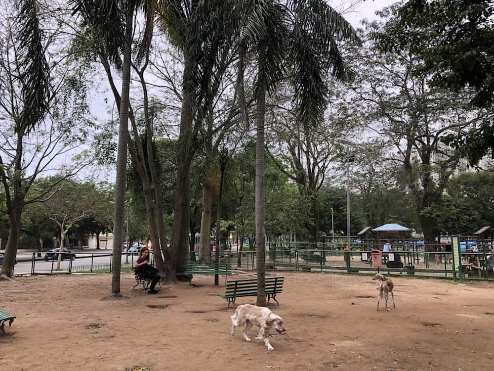 Dog parks are great places to socialize and make new dog friends. Here is a complete list of dog parks in Rio de Janeiro, both official and unofficial.