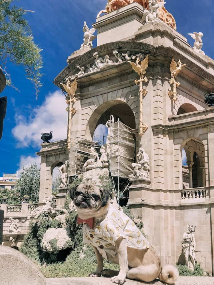 This four day Barcelona itinerary is dog-friendly! Here's how to spend four fun filled days exploring Barcelona with your furry pal.