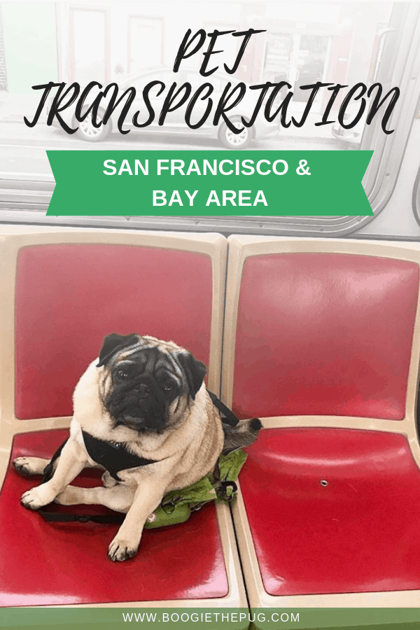 Public transportation is cost effective and convenient. Here's the low down on all pet-friendly San Francisco and Bay Area transportation.