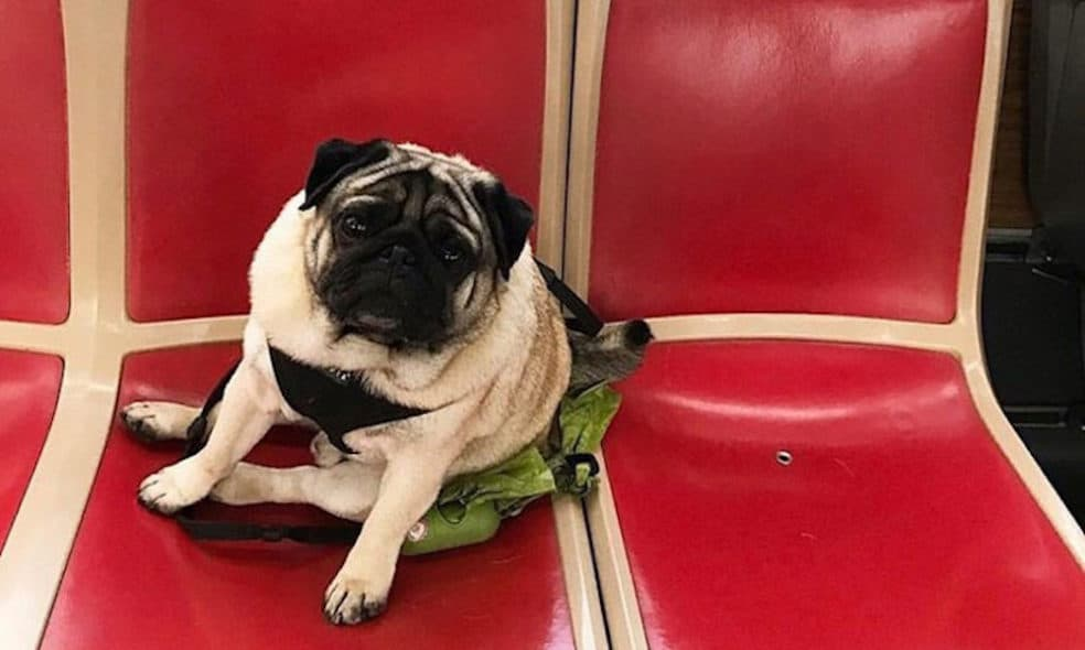 Publich transportation is cost effective and convenient. Here's the low down on all pet-friendly San Francisco and Bay Area transportation.
